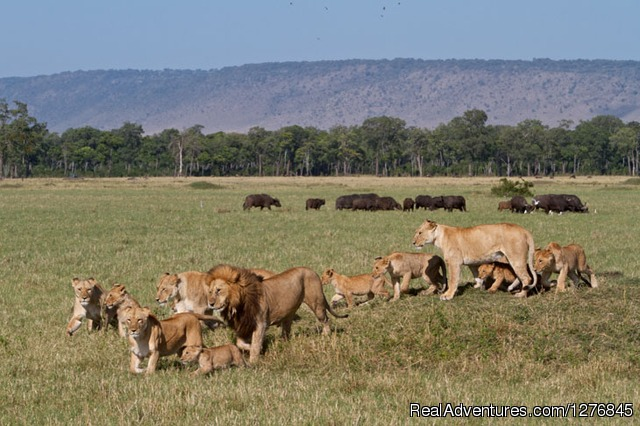3 Days Masai Mara Lodge Safari: A Pride of Lions