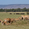 3 Days Masai Mara Lodge Safari Uthiru, Kenya Wildlife & Safari Tours