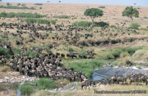 3 days Join-in Safaris To Masai Mara Sight-Seeing Tours Masai Mara, Kenya