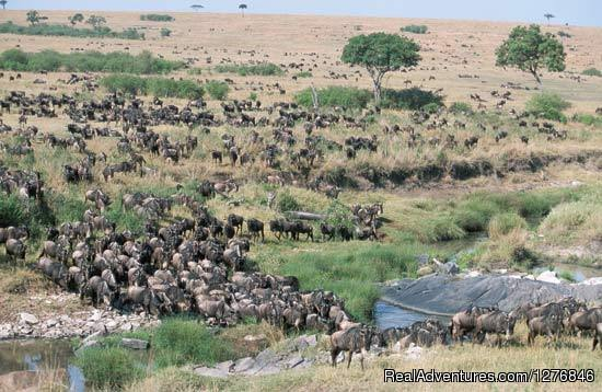 3 days Join-in Safaris To Masai Mara