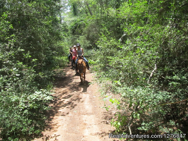 Miles of trails: - Horseback riding/lessons on beautiful Spring Creek