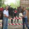 Horseback riding/lessons on beautiful Spring Creek Spring, Texas Horseback Riding