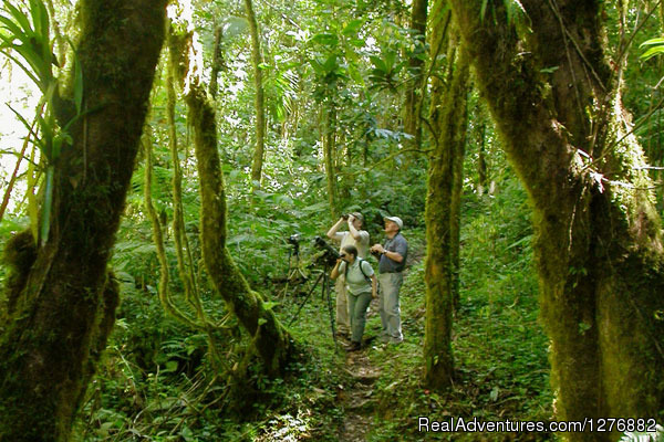 Guided Hike in Santa Elena Cloud Forest Reserve - Desafio Adventure Company Costa Rica