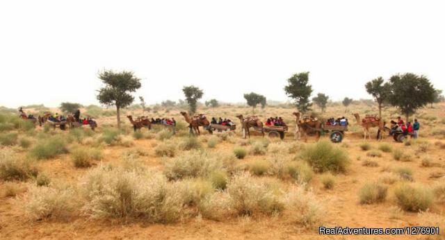 Camel Cart Safari - Umaid Safaris & Desert Lodge, Bikaner