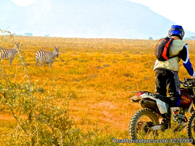 Encounter at Lake Elementaita Kenya - Motorbike Safaris in East Africa