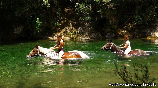 Horse Trekking through the river - Nelson Horse Trek Adventure - Off the Beaten Trek