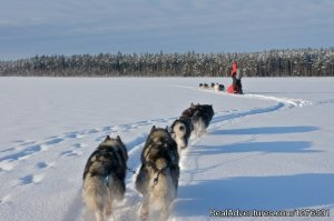 Dog sledding adventures Alavere, Estonia Bed & Breakfasts