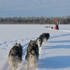 Dog sledding adventures Bed & Breakfasts Alavere, Estonia