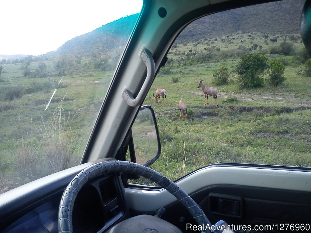 Toppy the Antelope | Image #3/3 | Budget Kenya safari,Safari to Kenya,Africa Travel