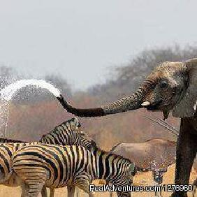 Animals battle it out for water in Masai Mara