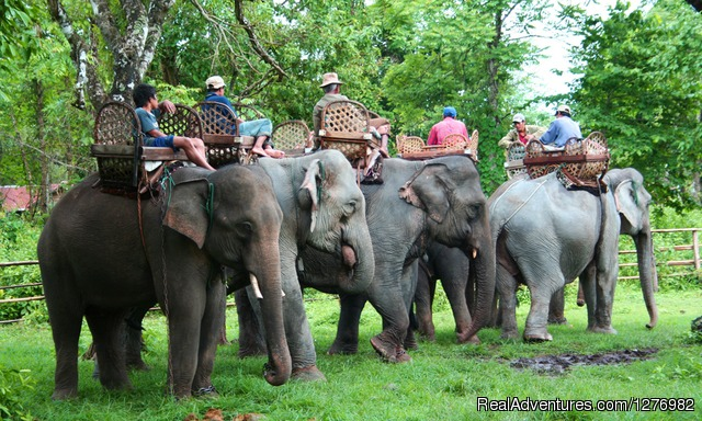 Elephant Camp Experience Laos