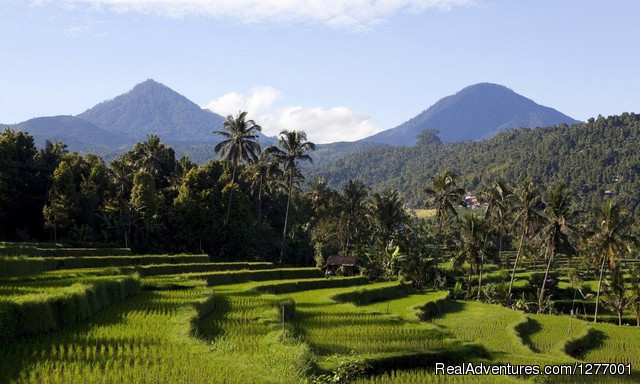 Image #4 of 7 - Home Of The Gods: Central Java