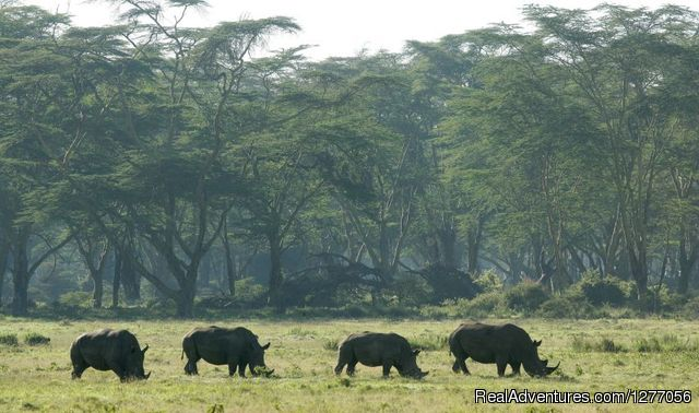 Lake Nakuru national Pak - 9 Days Kenya Flying Safari