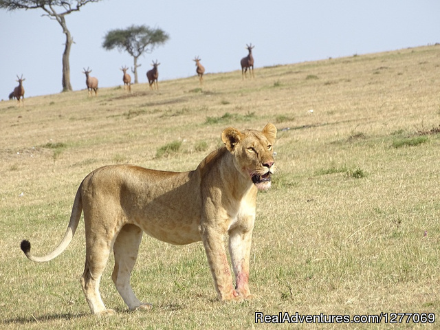 3 Days 2 Nights Masaimara Joining safari