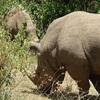 3 Days 2 Nights Masaimara Joining safari