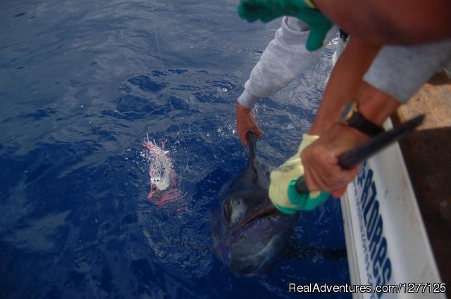 - Fishing Charter - Big Game and Coastal