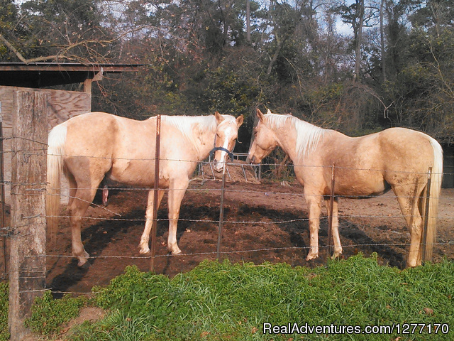 - Horse Lovers Let The Fun Begin at Loveland Ranch
