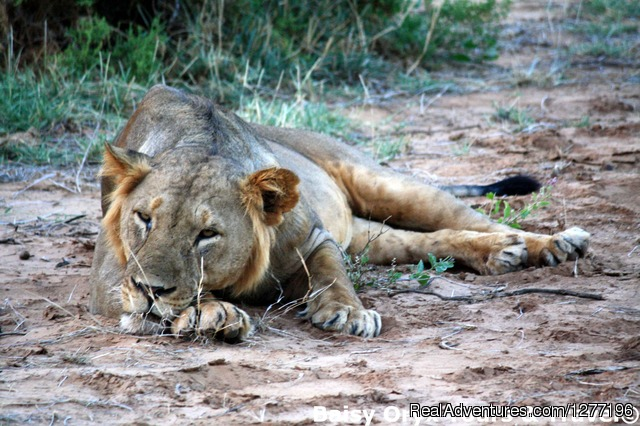 - 3 Days Maasai Mara Flying Package