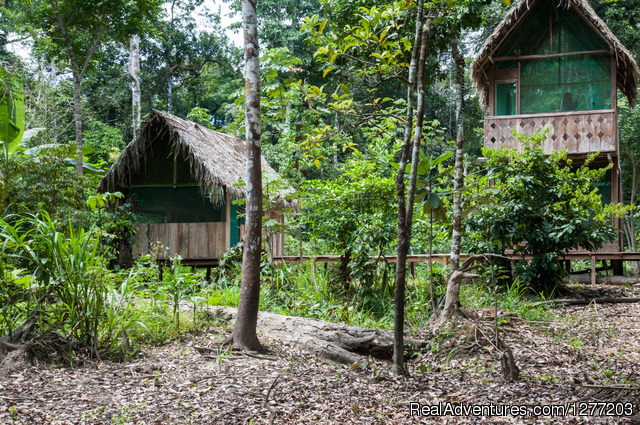 Rugged Jungle Adventure at Tapiche Jungle Reserve