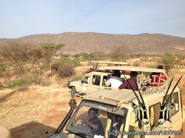 - 6 Days Big Five Adventure