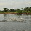 Adventure and explore in a cruise in the Amazon