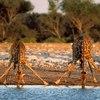 Morogoro Tanzania - Wildlife Safari