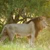 Morogoro Tanzania - Wildlife Safari Wildlife & Safari Tours Tanzania