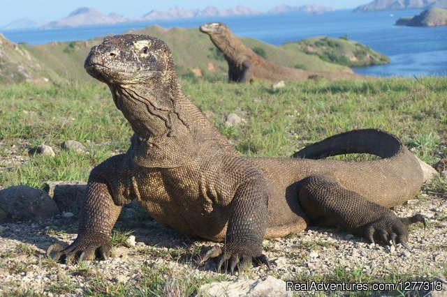 Amzing Tourism Destinations Flores and komodo