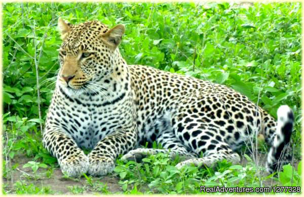 SkyWildlife Safari & Zanzibar Beach - Nature:Wildlife & Safari Tour
