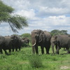 Nature:Wildlife & Safari Tour