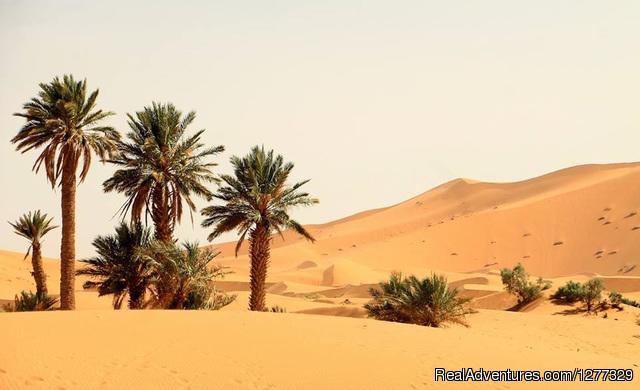 Desert Morocco Tours Sarl | Sahara Desert Trips Erg Chebbi Merzouga Morocco