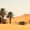 Desert Morocco Tours Sarl | Sahara Desert Trips Marrakech, Morocco Eco Tours