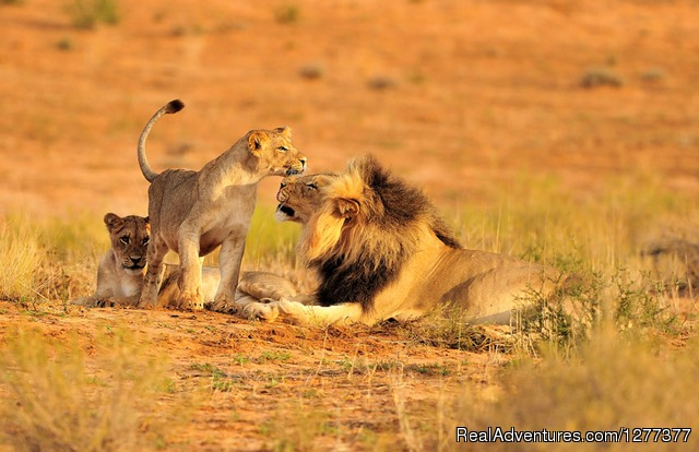 Lions - 6 Days 5 Nights Best of Luxury Tented Camp & Lodge