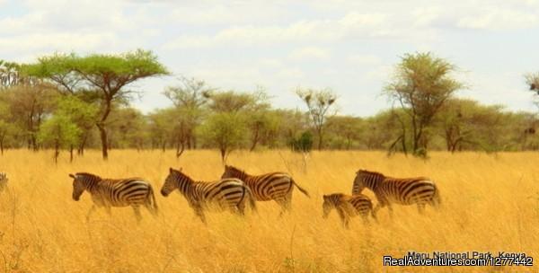 Wildlife Safari Exploreans Meru National park