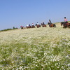 Horseback Riding in Poland Horseback Riding Poland