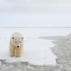 Expeditions Alaska - Sea Kayaking & Backpacking