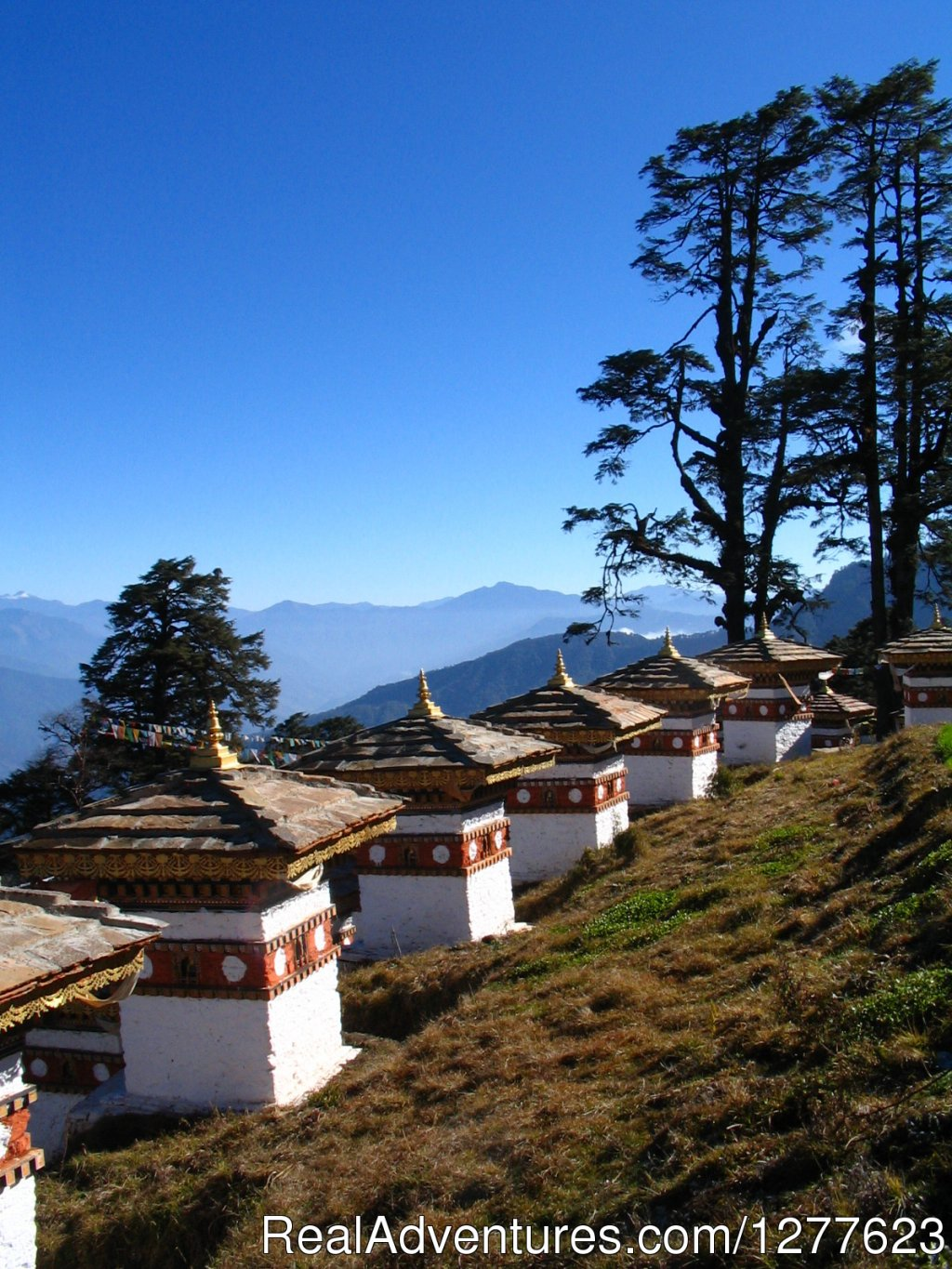 Docjula Pass (Bhutan) | Image #6/8 | Pedalers Pub & Grille