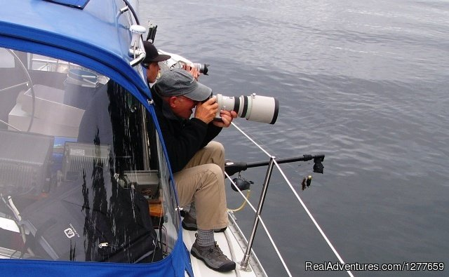 Specializing on bringing you close to wildlife. | Image #8/21 | Sound Sailing- Crewed Sailboat Charters in Alaska