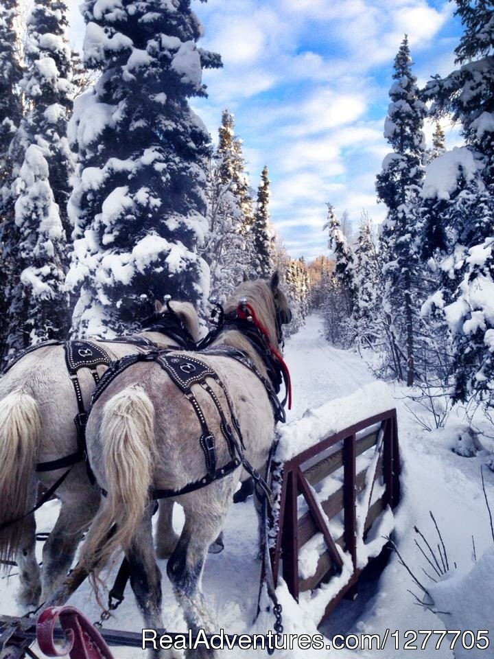 "Whether you're looking for romantic getaways, family enrichment, backwoods ""roughin' it,� hunter & game transporting, or horsedrawn nostalgia, Alaska Horse Adventures has it! Our scenic trail rides last from 1.5 hours to half day."