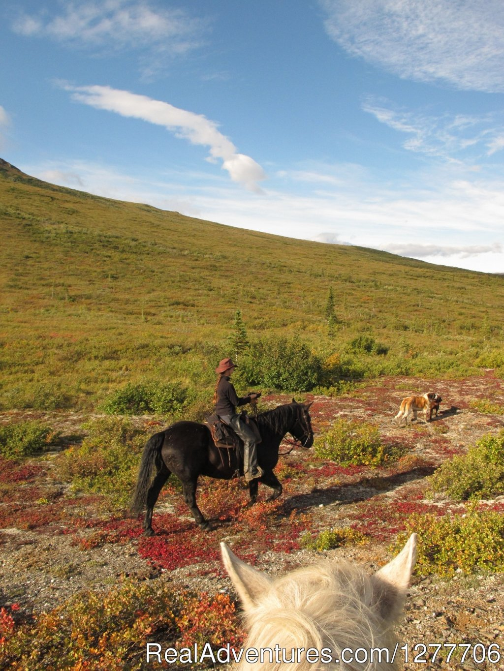 Fall horseback riding in Alaska | Image #8/9 | Denali Horseback Tours