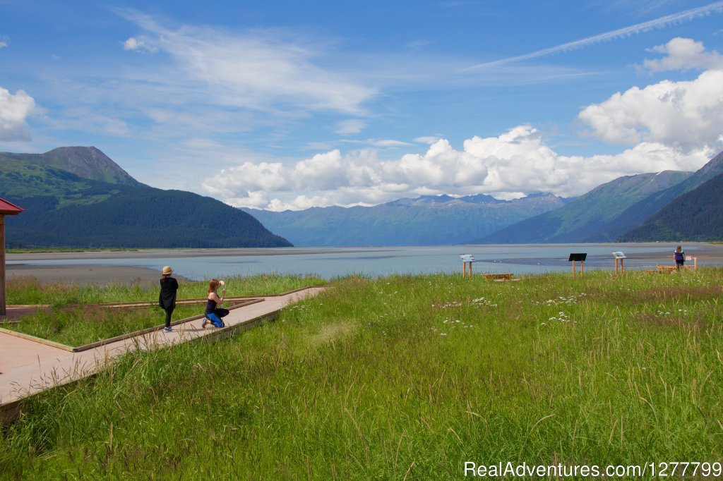 Turnagain Arm | Image #10/13 | Glaciers/Wildlife and Anchorage views in one day