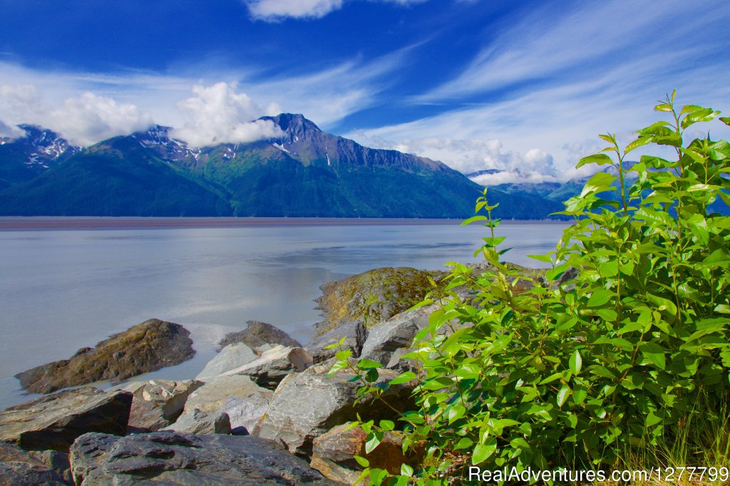 Turnagain Arm of the Cook Inlet | Image #2/13 | Glaciers/Wildlife and Anchorage views in one day