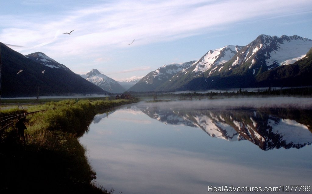 Scenic Portage Valley | Image #1/13 | Anchorage, Alaska  | Sight-Seeing Tours | Glaciers/Wildlife and Anchorage views in one day
