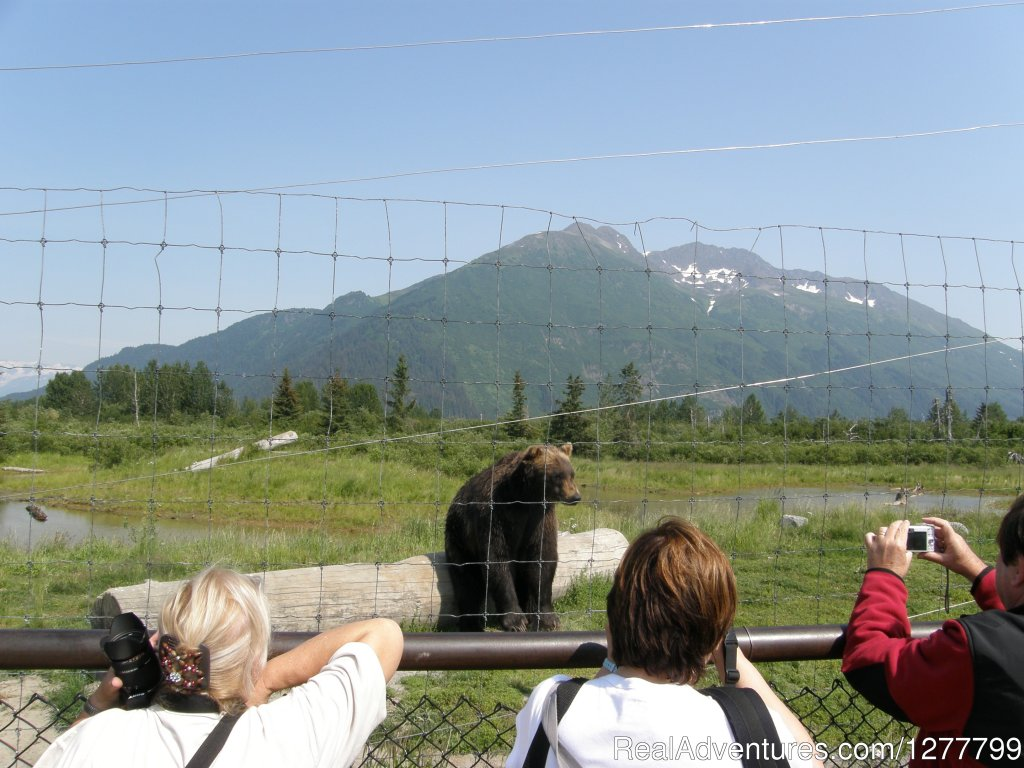 JB Coastal Brown Bear | Image #9/13 | Glaciers/Wildlife and Anchorage views in one day