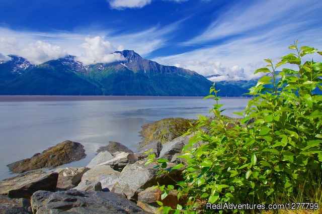 Turnagain Arm of the Cook Inlet - Glaciers/Wildlife and Anchorage views in one day