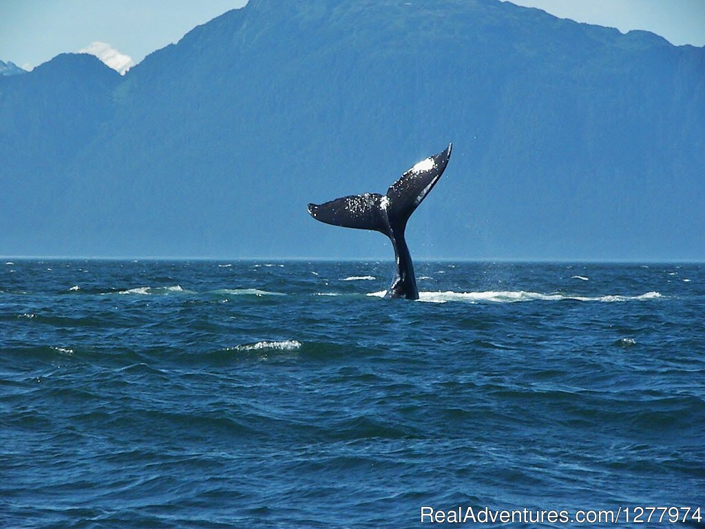 Image #3/8 | Guaranteed Whale Watching Adventure