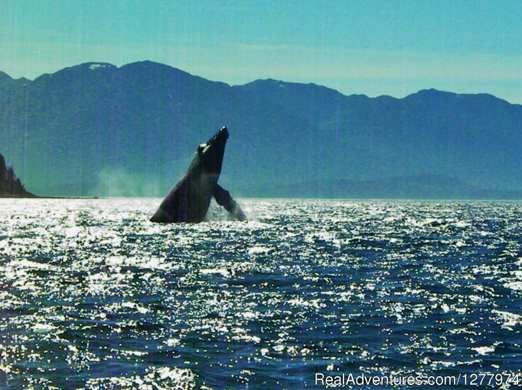 Image #6/8 | Guaranteed Whale Watching Adventure