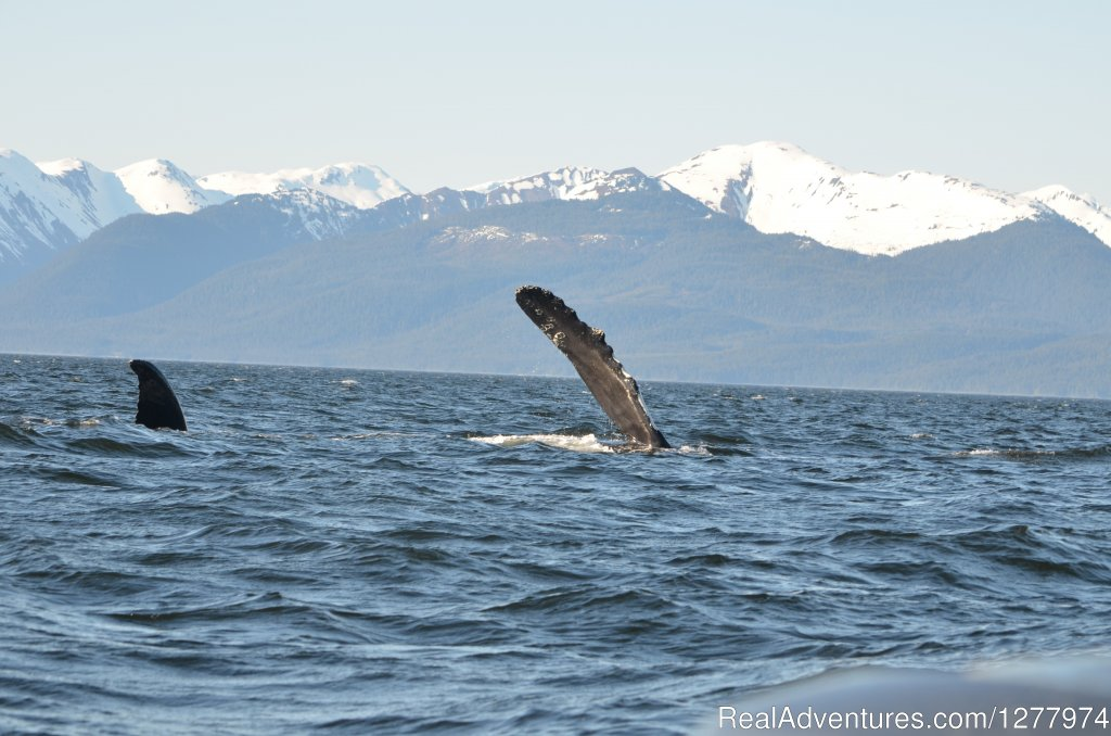 Image #7/8 | Guaranteed Whale Watching Adventure