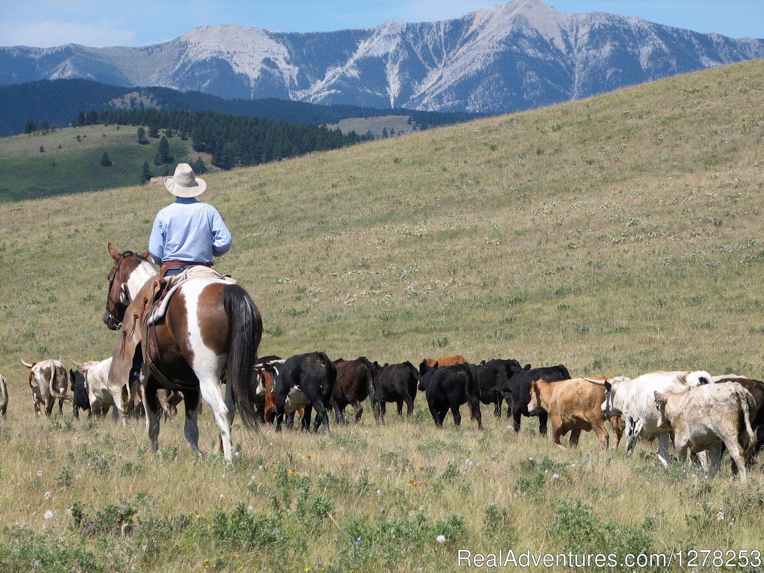 Frontier Cattle Drive | Image #1/4 | Lundbreck, Alberta  | Vacation Rentals | Sierra West Cabin & Ranch Vacations