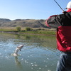 Alberta Sturgeon Fishing Trips